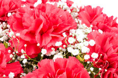 Flowers of carnations Royalty Free Stock Image