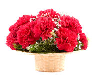 Flowers of carnations Royalty Free Stock Photo