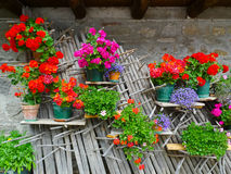 Flowers in Carnia Stock Image