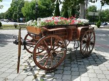 Flowers in the carriage- cvece u kociji. Perfect sunny weather in one village in Vojvodina,  Serbia. The old carriage is use on total different way. Very Royalty Free Stock Images