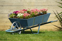Flowers cart. Colorful flowers in a cart near the garden's wall Royalty Free Stock Image