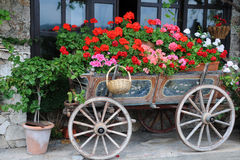 Flowers in the Cart. Garden in the cart in the city of Veliko Tarnovo in Bulgaria Royalty Free Stock Photos