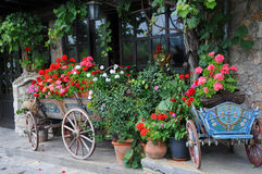 Flowers in the Carts and Planters Stock Images