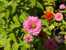 Flowers in the Castle Garden in Krakow Poland Royalty Free Stock Photography