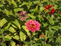 Flowers in the Castle Garden in Krakow Poland Stock Image