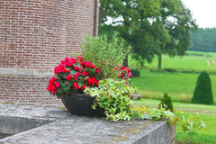 Flowers in the castle Heeswijk . Stock Image