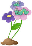Flowers with caterpillars Stock Photo