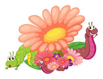 Flowers with caterpillars Stock Images