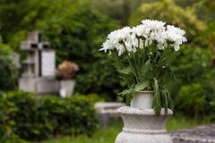 Flowers in cemetery. Sear white flowers in an old cemetery Stock Photos