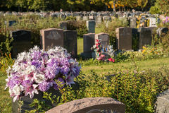 Flowers in a cemetery. With headstones in the background at sunset Stock Images