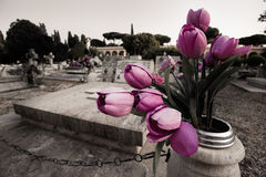 Flowers in the cemetery. Purple flowers in a tomb at the cemetery Stock Images