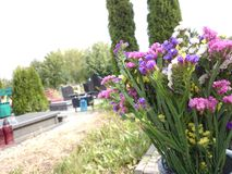 Flowers in the cemetery. Royalty Free Stock Photos
