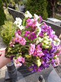 Flowers in the cemetery. Royalty Free Stock Images