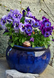 Flowers in the ceramic pot. (violet pansy Royalty Free Stock Images