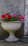Flowers. Ceramic pots with colorful flowers place of the old wall Royalty Free Stock Photo