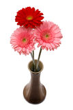 Flowers in the ceramic vase Royalty Free Stock Photos