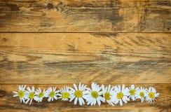Flowers chamomile border Stock Images