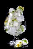 Flowers of chamomile and mint leaves frozen in ice. Stock Image