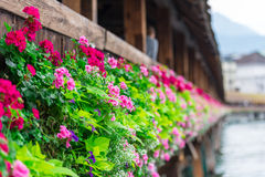 Flowers on The Chapel Bridge in Lucerne Stock Image