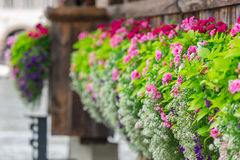Flowers on The Chapel Bridge in Lucerne Royalty Free Stock Images