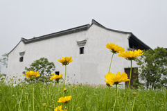 Flowers before Chinese folk house. The pictures was taken on 3rd, May 2012 at Xixi wetland garden, Hangzhou, China. Some golden chrysanthemums  are in full bloom Stock Images