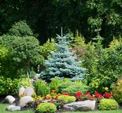 Flowers and christmas tree in garden Royalty Free Stock Photos