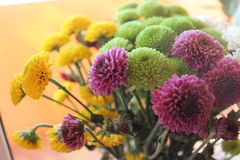 Flowers: chrysanthemums. Autumn time. Royalty Free Stock Photos