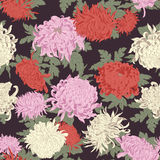 Flowers. Chrysanthemums. Seamless vector background in vintage style. Stock Image