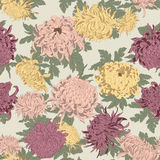 Flowers. Chrysanthemums. Seamless vector background in vintage style. Classic. Botany. Floral ornament Stock Photos