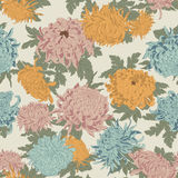 Flowers. Chrysanthemums. Seamless vector background in vintage style. Classic. Botany. Floral ornament Stock Photography