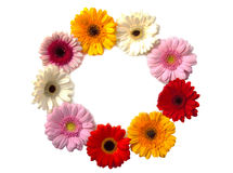 Flowers in a circle. A circle of colorful flowers isolated over white Stock Photos