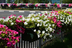 Flowers in the city Royalty Free Stock Photo