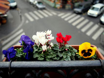 flowers balcony city Royalty Free Stock Photos
