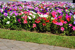 Flowers. In city of Nova Petrópolis Stock Image