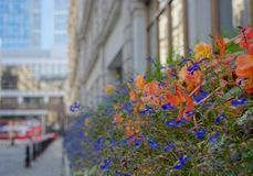Flowers in the city. Window flower boxes in London brighten up the streets and attract insects which is healthier for the environment stock photography