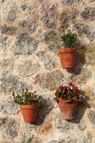 Flowers in clay pots hung on the stone wall royalty free stock photography