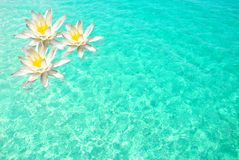 Flowers on Clear Water Stock Photos
