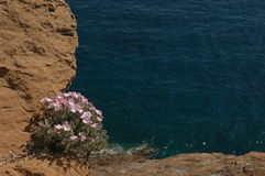 Flowers on the cliff Royalty Free Stock Photos