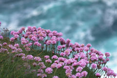 Flowers on a cliff. Stock Image