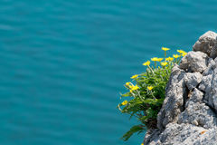 Flowers on the cliff Stock Image