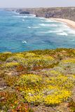Flowers, Cliffs, beach and waves in Arrifana. Aljezur, Algarve, Portugal Royalty Free Stock Image