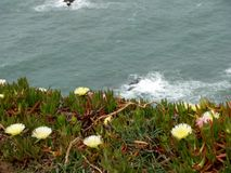 Flowers on the cliffs of Cabo da Roca Cape Roca in Sintra. The most western point of Europe. Flowers on the cliffs of Cabo da Roca Cape Roca in Sintra. The most royalty free stock photo