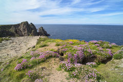 Flowers on cliffs in Ireland Stock Photo