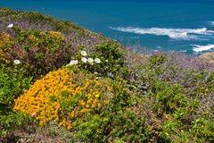 Flowers on cliffs near the sea Stock Image