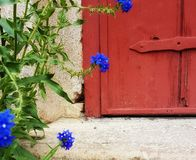Flowers Close To You. Flowers on your doorstep Stock Images