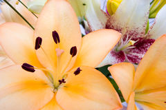 Flowers Close Up Stock Images