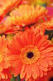 Flowers close-up Stock Image