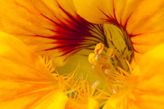 Flowers close up photograph Stock Photos