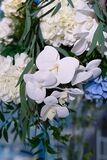 flowers close-up, white archideas, gardenia for the whole frame photographed, a combination of color blue, white,