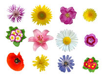 Flowers closeup. Isolated on white background Stock Images